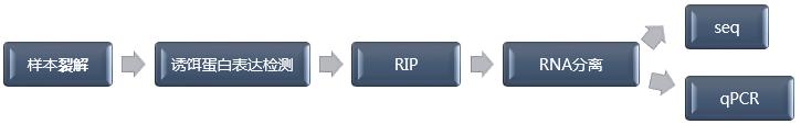 RIP技术流程.png