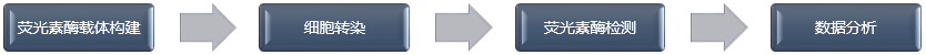 启动子活性检测技术流程.png