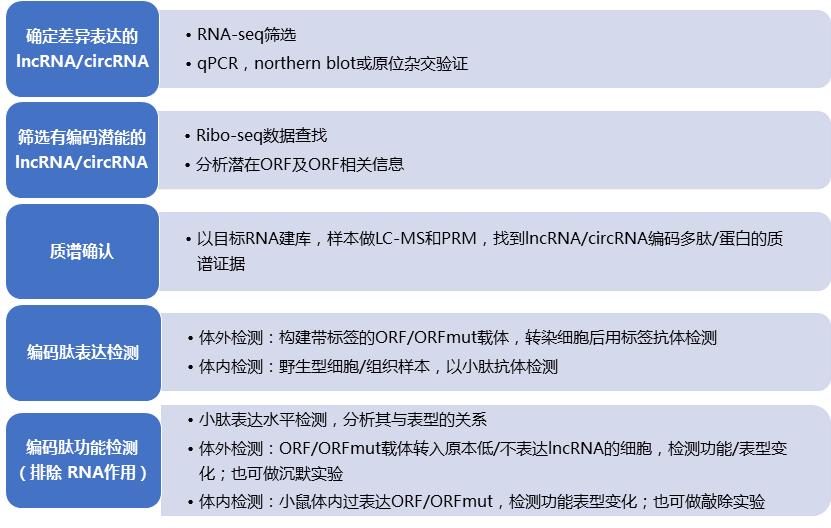 lncRNA技术流程.png